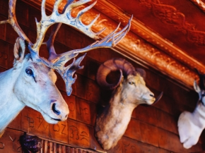 Mint Bar Caribou Mount