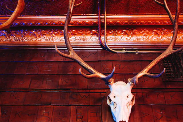 Mint Bar Elk Mount