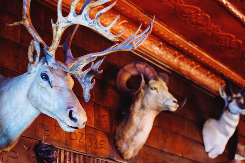 Mint Bar Caribou Mount
