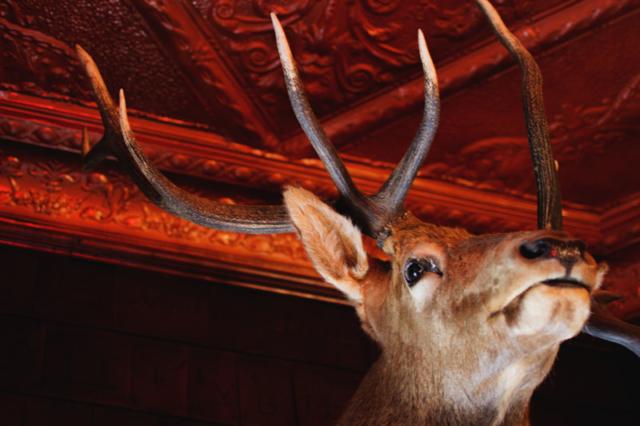 Mint Bar Elk Mount 2