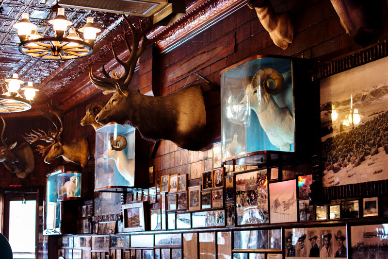 Mint Bar Historic Photos with Taxidermy 2