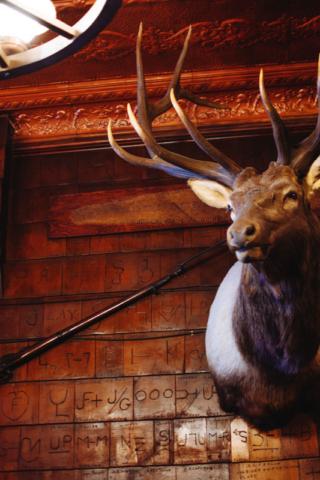 Mint Bar Elk Mount 3